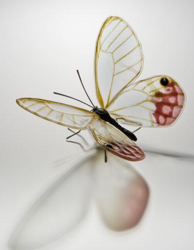 Glasswing Butterfly