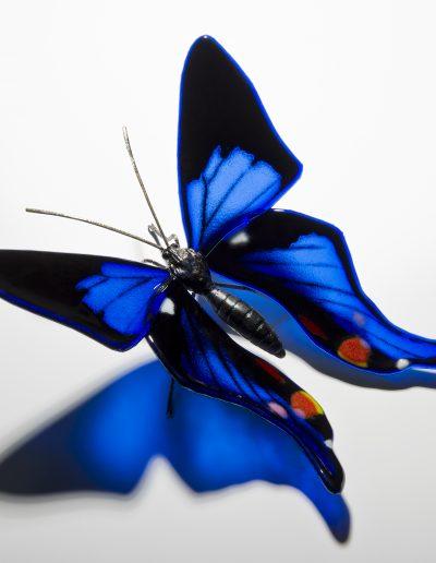 Periander Metalmark Butterfly