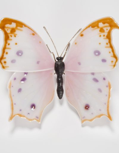 Mother of Pearl Morpho