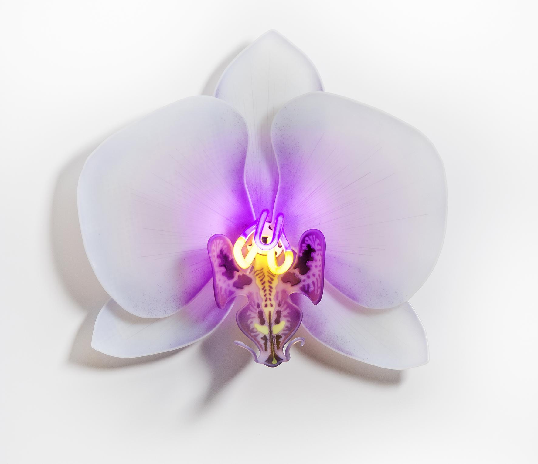 Phalaenopsis Apaloosa